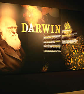 darwin chat rooms 6 reviews of darwin room darwin room was a delightful find with so many interesting specimens, little figures as more people walk in and chat.